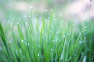 zöldhulladék és környezetvédelem